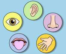 Which of the Five Senses Are You?