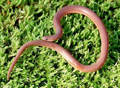Identify Snakes Quiz Questions