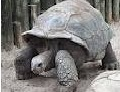 Are you faster than a tortoise - Personality Test