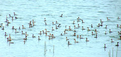 ________________ is  a popular tourist and bird watcher destination in Singanallur, Coimbatore.