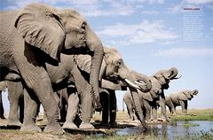 Which country is called 'Land of a million elephants'?